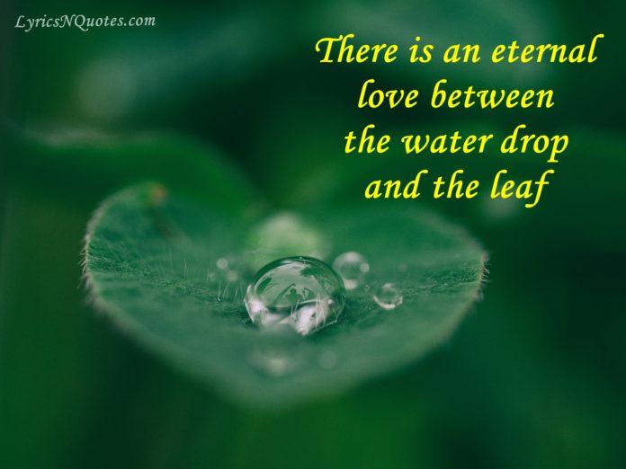 Drops-Quotes